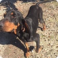 Adopt A Pet :: Wayne - Tuskegee, AL