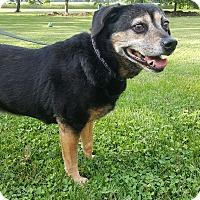 Adopt A Pet :: Sami - Oakland, MI