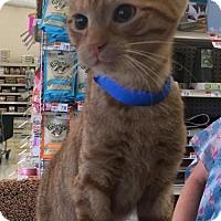 Adopt A Pet :: Sheldon - Buffalo, NY