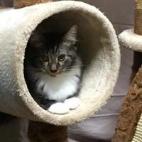 Adopt A Pet :: Luther - Salem, OH