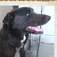 Adopt A Pet :: PRINCE:Low Fees/Neutered - Red Bluff, CA