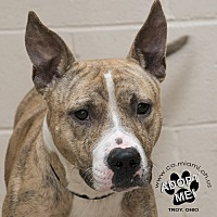 Adopt A Pet :: Marco - Troy, OH