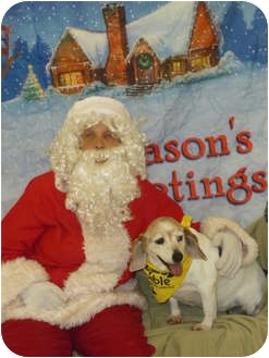 Beagle Dog for adoption in Somerset, Pennsylvania - Mustang Sally