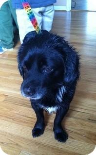 Cocker Spaniel/Terrier (Unknown Type, Medium) Mix Dog for adoption in Birmingham, Alabama - Rudy