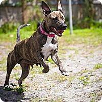 Adopt A Pet :: Sailor girl - Lake Worth, FL