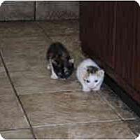 Adopt A Pet :: Chantilly - Secaucus, NJ