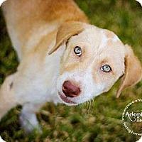 Adopt A Pet :: Noodles - San Antonio, TX