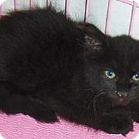 Adopt A Pet :: Coal - Chandler, AZ