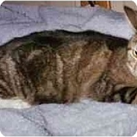 Adopt A Pet :: Emily - Bedford, MA