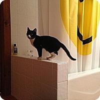 Adopt A Pet :: Margie - Portland, ME