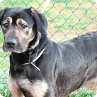 Adopt A Pet :: Big mush Rufus - Baltimore, MD