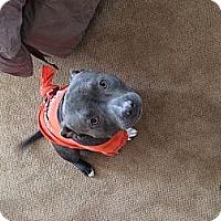 Adopt A Pet :: Marvin - San Diego, CA
