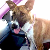 Adopt A Pet :: Miss Moo looking for mommie - Sacramento, CA