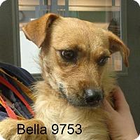 Adopt A Pet :: Bella - Greencastle, NC
