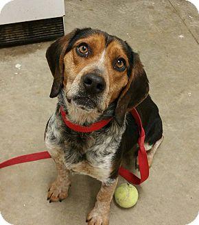 Beagle Mix Dog for adoption in Lisbon, Ohio - Riddle