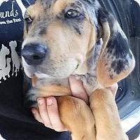 Adopt A Pet :: Frankie - Gainesville, FL