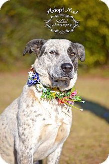 Blue Heeler Mix Dog for adoption in Fort Valley, Georgia - Avery