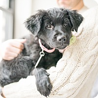 Adopt A Pet :: Buttercup - Jersey City, NJ