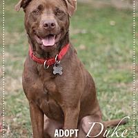 Adopt A Pet :: Duke - Stafford, VA