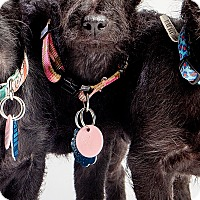 Adopt A Pet :: Muscat:  adoption pending - Astoria, NY