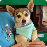 Adopt A Pet :: Feddie - Lake Worth, FL