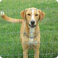Adopt A Pet :: Whiskey - Mexia, TX