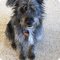 Adopt A Pet :: Marley - Penngrove, CA