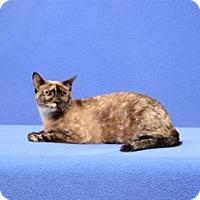 Adopt A Pet :: Willow - Cary, NC