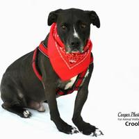 Adopt A Pet :: Crook - Port Charlotte, FL