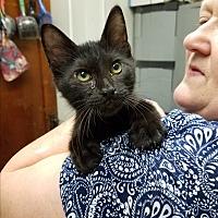 Adopt A Pet :: Monterey Jack - Fairbury, NE
