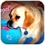 Photo 3 - Pug/Beagle Mix Dog for adoption in Watertown, South Dakota - Angel