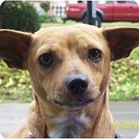 Adopt A Pet :: Ginger - Rancho Cordova, CA