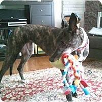 Adopt A Pet :: Carmen - Philadelphia, PA