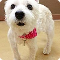 Adopt A Pet :: Stella - North Palm Beach, FL