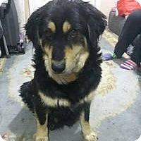 Adopt A Pet :: Dallas - New Boston, NH
