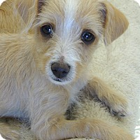 Adopt A Pet :: Dilly - La Habra Heights, CA