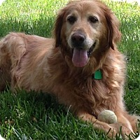 Adopt A Pet :: Jake - Denver, CO