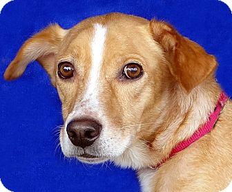 Hound (Unknown Type) Mix Dog for adoption in Renfrew, Pennsylvania - Alastor