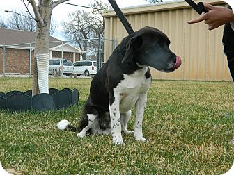 Beagle Mix Dog for adoption in Columbus, Nebraska - Otto