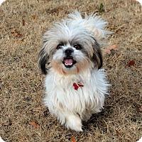 Adopt A Pet :: *Presha - PENDING - Westport, CT
