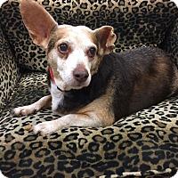 Adopt A Pet :: Bea - Valencia, CA