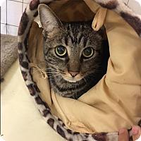 Adopt A Pet :: bandit - Valencia, CA