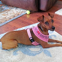 Adopt A Pet :: Shika - Pelzer, SC