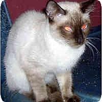 Adopt A Pet :: Corky - Jacksonville, FL