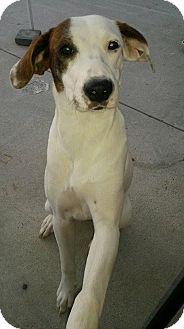 Hound (Unknown Type) Mix Puppy for adoption in Mantua, New Jersey - Allie