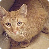 Adopt A Pet :: Wilbur - Kensington, MD