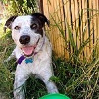 Adopt A Pet :: HERMES - Pt. Richmond, CA