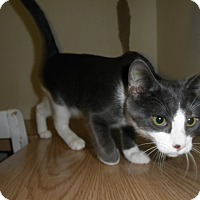 Adopt A Pet :: Regatta - Milwaukee, WI
