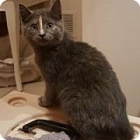 Adopt A Pet :: Penguin - McHenry, IL