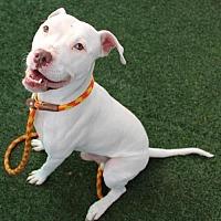 Adopt A Pet :: Irish - Woodland, CA